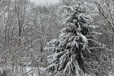 Winter 2010-2011-jlb-01-07-11-5564
