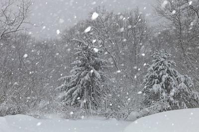 Winter 2010-2011-jlb-01-12-11-5875