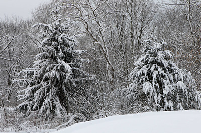 Winter 2010-2011-jlb-01-07-11-5562