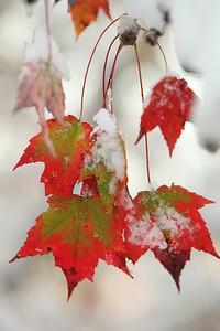 Snow-jlb-10-30-11-8631