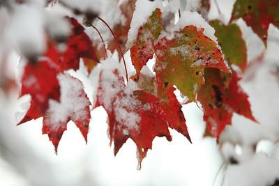 Snow-jlb-10-30-11-8628