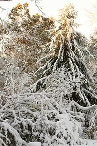 Snow-jlb-10-30-11-8622
