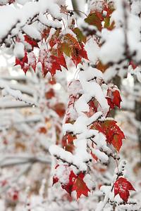 Snow-jlb-10-30-11-8626