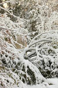 Snow-jlb-10-30-11-8624