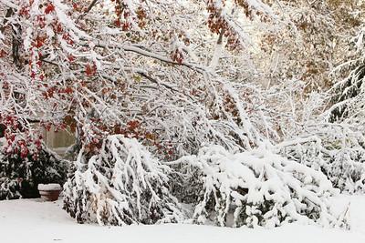 Snow-jlb-10-30-11-8603