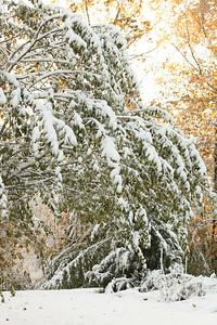Snow-jlb-10-30-11-8616