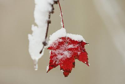 Snow-jlb-10-30-11-8634a