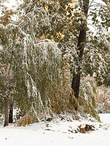 Snow-jlb-10-30-11-8611