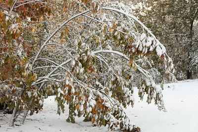 Snow-jlb-10-30-11-8617