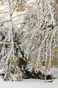 Snow-jlb-10-30-11-8605
