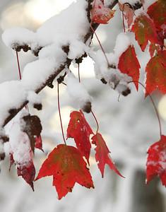 Snow-jlb-10-30-11-8632