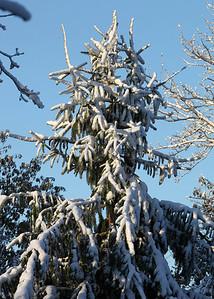 Snow-jlb-10-30-11-8633