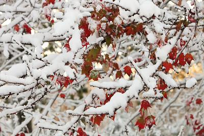 Snow-jlb-10-30-11-8625