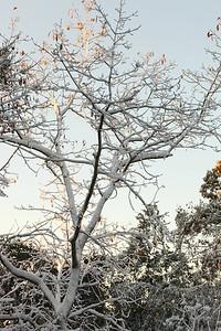 Snow-jlb-10-30-11-8623