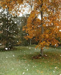 Snow-jlb-10-29-11-0568