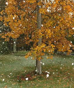 Snow-jlb-10-29-11-0567