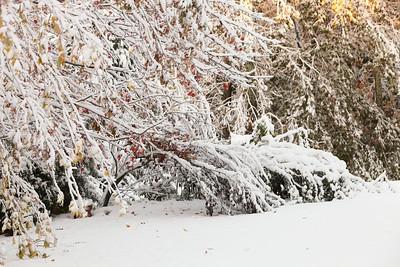 Snow-jlb-10-30-11-8609