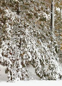Snow-jlb-10-30-11-8618