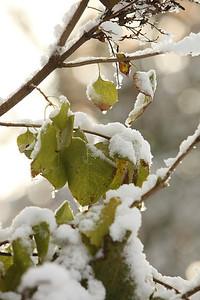 Snow-jlb-10-30-11-8607