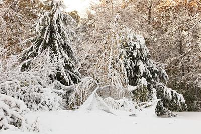 Snow-jlb-10-30-11-8604