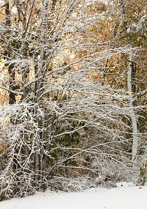 Snow-jlb-10-30-11-8619