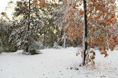 Snow-jlb-10-30-11-8601
