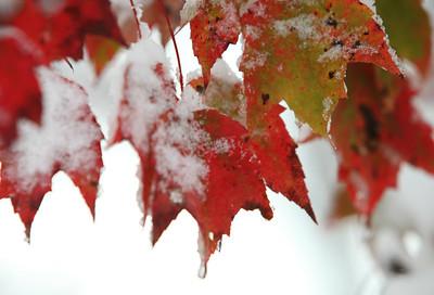 Snow-jlb-10-30-11-8627