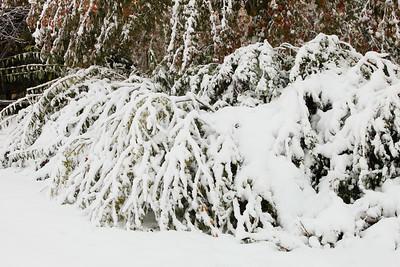 Snow-jlb-10-30-11-8610