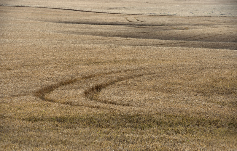 Wheat Trails