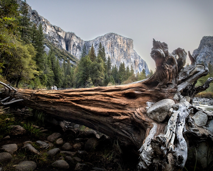 Giant Sequoia and El Capitan