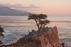 The Lone Cypress.  Pebble Beach