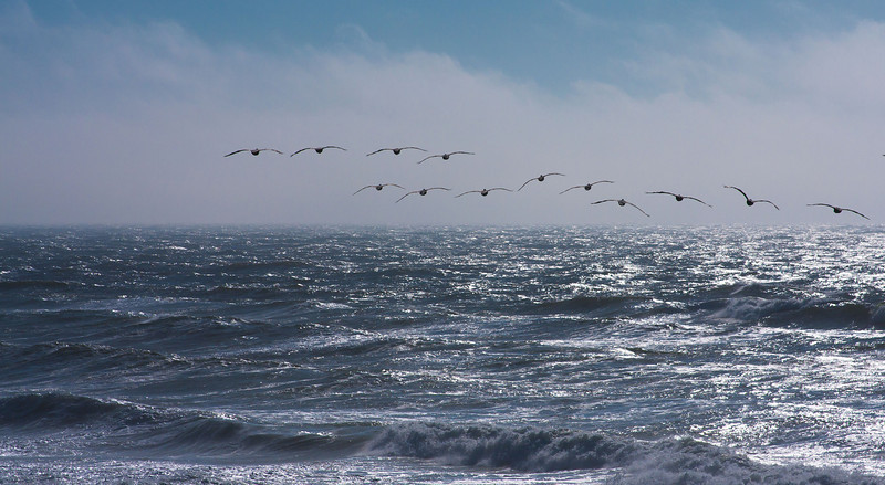 Geese flying in formation over the Pacific.