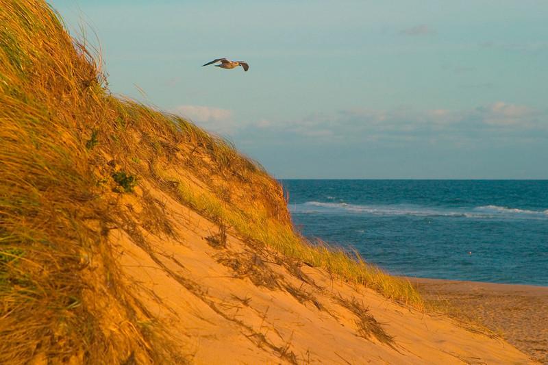 SEA010<br /> Soaring in the Morning<br /> Cape Cod, Mass.
