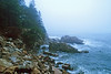 SEA011<br /> Foggy Coast<br /> Schoodic Peninsula, Acadia NP, Maine