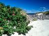 Cape Beach Roses<br /> Campe Cod, <br /> Mass