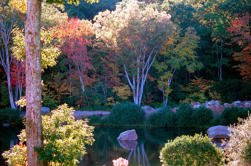 FC010<br /> Pond At Nature's Art<br /> Today you can see Dinosaurs lingering here.<br /> Montville, CT