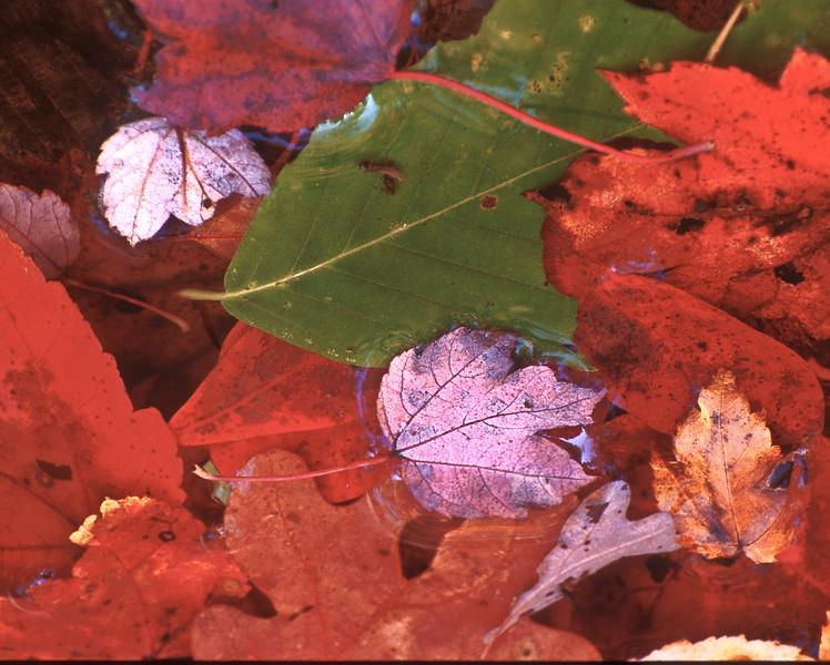 FC019<br /> Floating Leaves