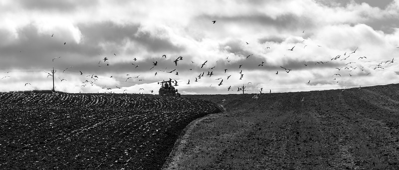 Ploughing - Nr Aldborogh North Yorkshire UK 2014