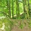 Hide and Seek Olivia: Glendalough -  County Wicklow, Ireland