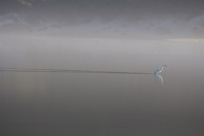 A Little Egret, and the light, and the dark