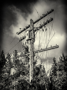 Power and telephone pole put into service in the 1920's. Pollard Flat.