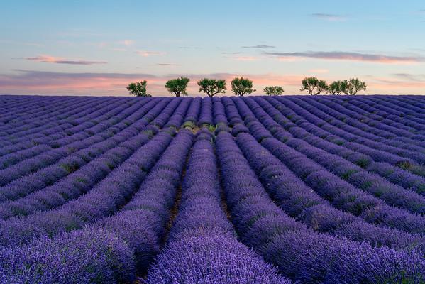 Fields of Purple