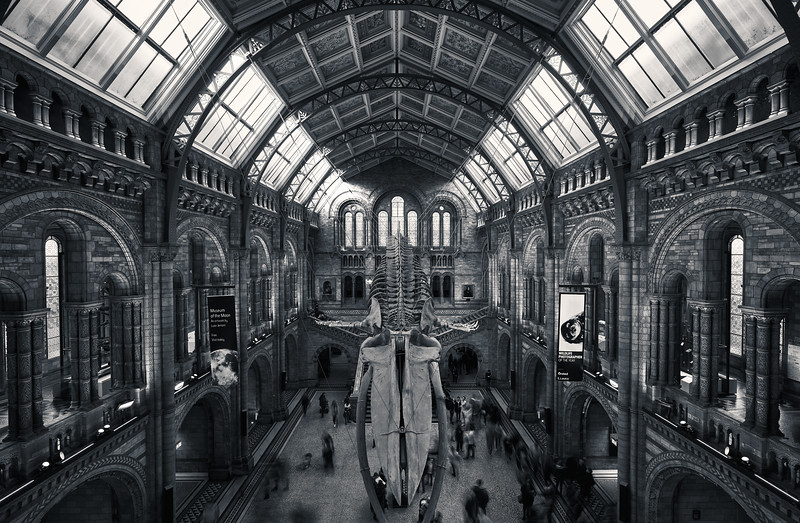 Natural History Museum B&W