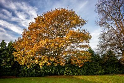 Ingrid's Tree