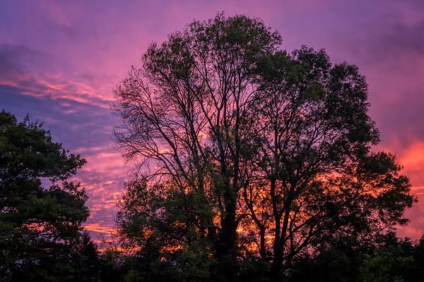 Ingrid's Tree this evening