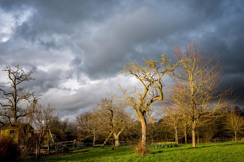 The Giving Tree, evening light