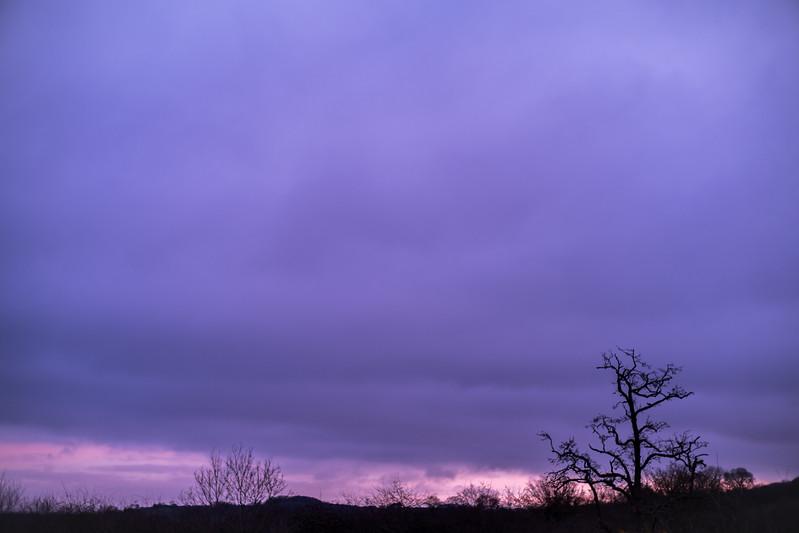 The Colour Purple