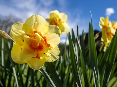 The Daffodil & The Bug