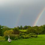 Sammy & the Rainbow