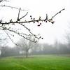 Misty January Morning